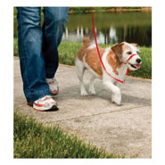 25802-easy-walk-head-collar-for-dogs-small-red.jpg