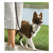 25804-easy-walk-head-collar-for-dogs-medium-black.jpg