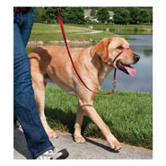 25810-easy-walk-head-collar-for-dogs-large-red.jpg