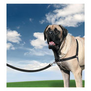 25828-easy-walk-dog-harness-x-large-black.jpg