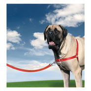 25830-easy-walk-dog-harness-x-large-red.jpg