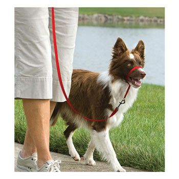 25806-easy-walk-dog-head-collar-medium-red.jpg