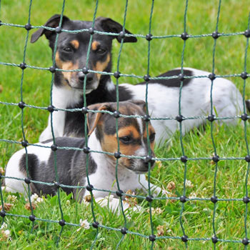 Narrow mesh width, only 5 x 5 cm, also suitable for large dogs.