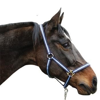 501020.set-1-kerbl-horse-halter-lead-rope-200cm-blue-thoroughbred.jpg