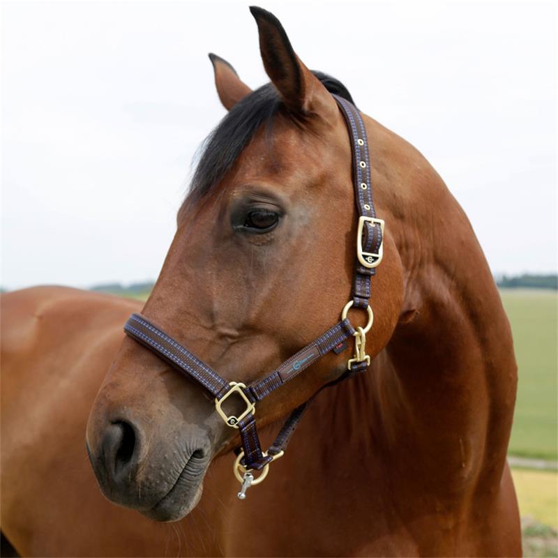 501320-3-goleygo-v2-halter-for-horses-and-ponies-brown-light-blue.jpg