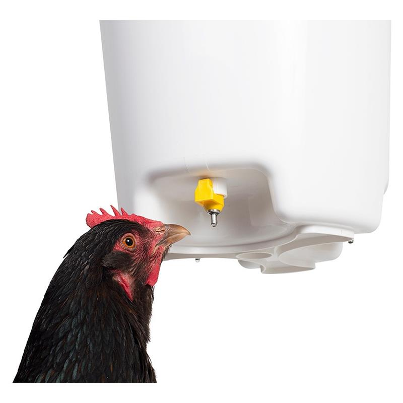 Astounding Bucket Nipple Waterer Poultry Drinker 12 L Interior Design Ideas Clesiryabchikinfo