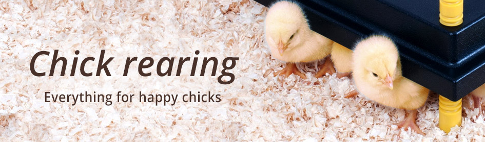 Chick Rearing