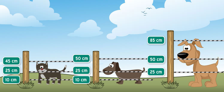 Fence height suitable for dogs and cats.