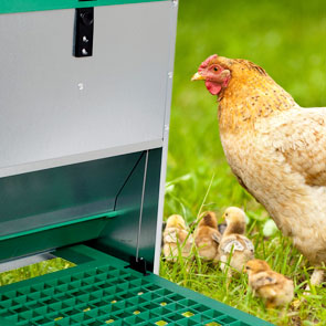 Highlight-Poultry-troughs