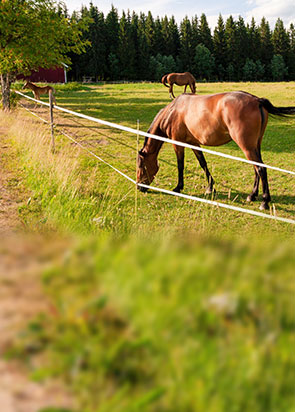 horses-complete-kits
