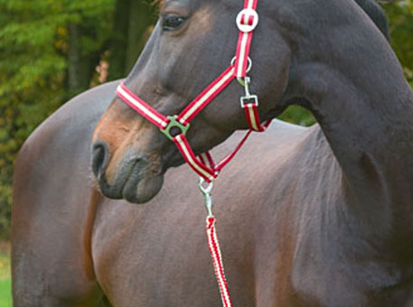 halter-and-lead-ropes